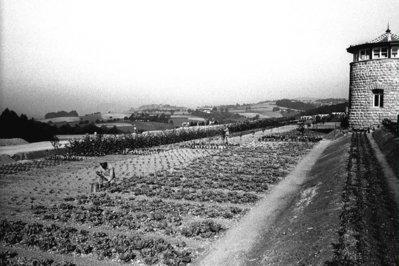 Horts ubicat fora de les muralles de Mauthausen